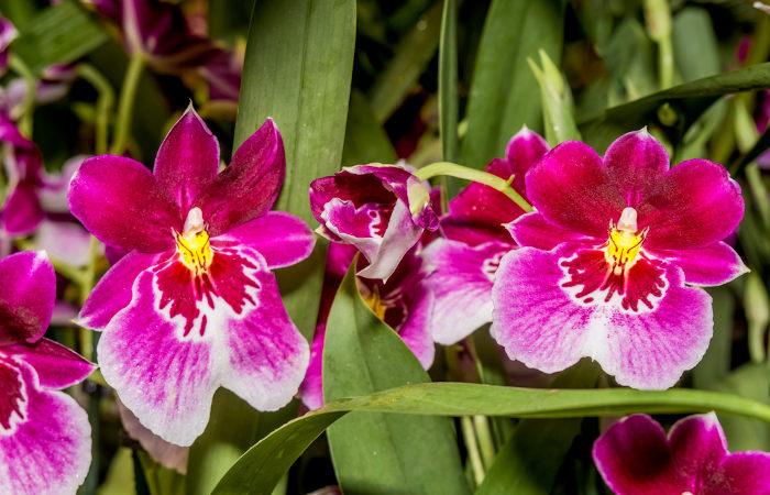 Orquídeas são exemplos de angiospermas.