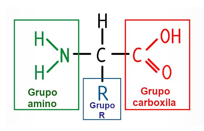 Observe acima a estrutura básica de um aminoácido.