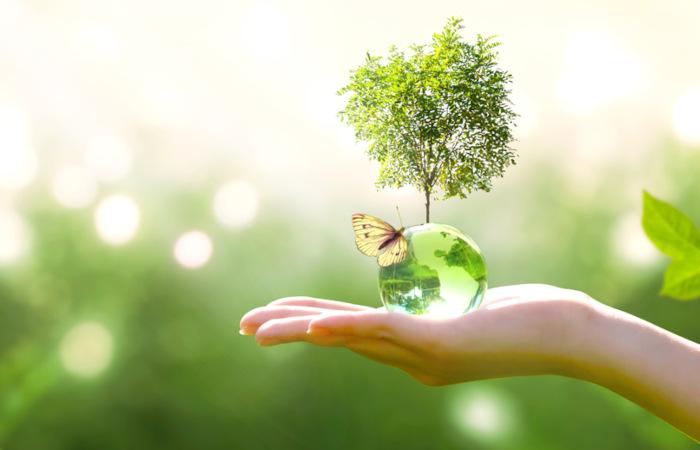 Quando estudamos ecologia, percebemos a importância de cuidar-se do meio ambiente.