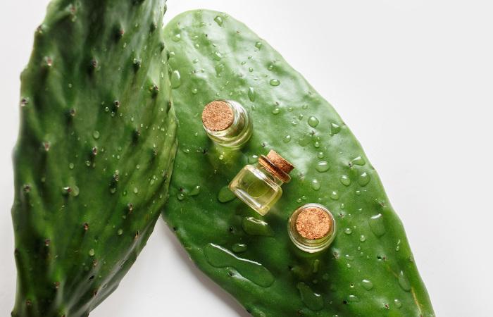 O cacto é uma espécie de vegetal que possui cera em seu revestimento externo para evitar a perda d'água.