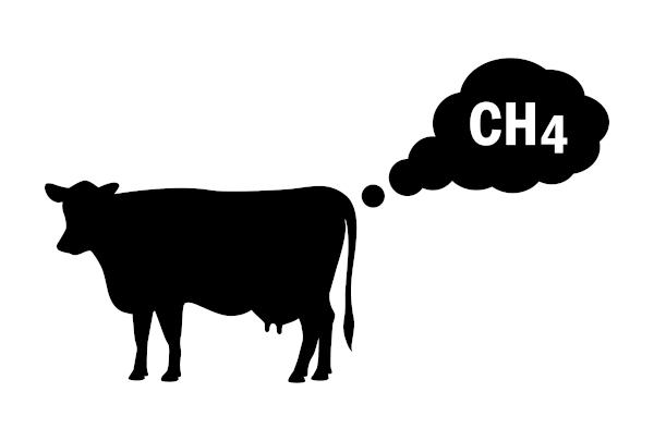O metano, formado por um carbono e pertencente à função alcano, é um gás de efeito estufa produzido pela digestão e decomposição de matéria orgânica.
