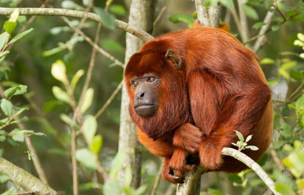 Os macacos são mamíferos do grupo dos primatas.
