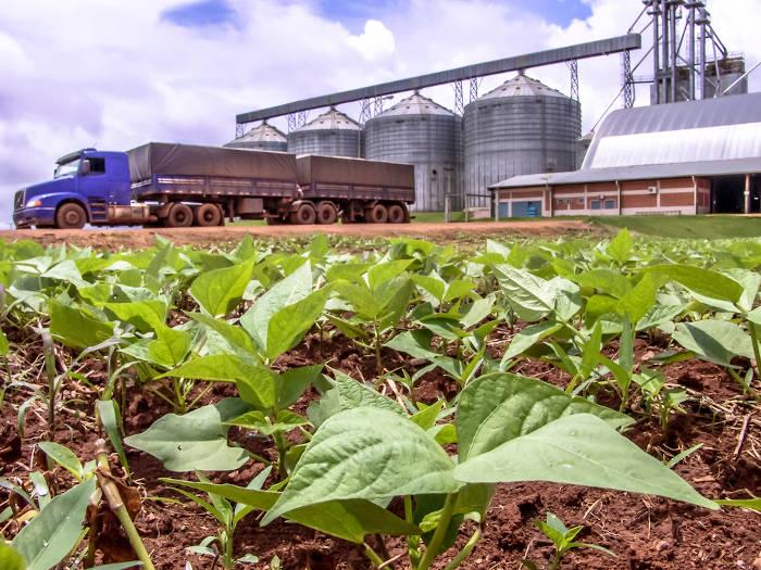 Na região Centro-Oeste do Brasil predominam as atividades ligadas ao setor primário da economia, como a agricultura e a pecuária.