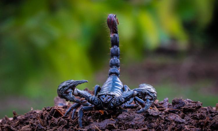 Os aracnídeos apresentam quatro pares de patas.