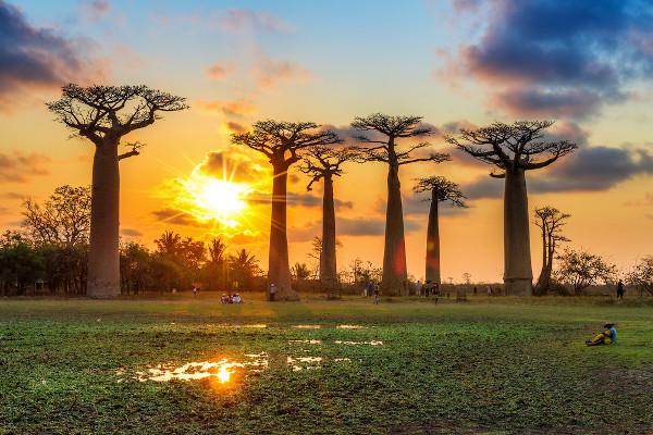 Baobás em Madagascar, um dos países insulares do continente africano.