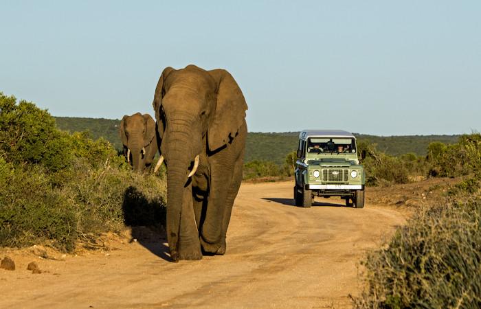A fauna da África do Sul é composta por animais de grande porte, como os elefantes, que habitam as savanas.