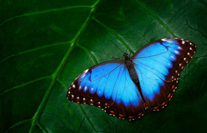 Os insetos apresentam três pares de patas.