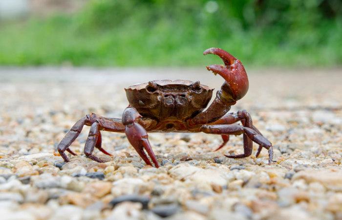 Artrópodes possuem corpo envolvido por um exoesqueleto.