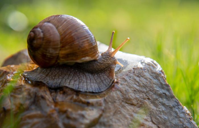 Moluscos apresentam corpo mole e, muitas vezes, protegido por conchas.