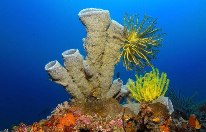 As esponjas apresentam o corpo repleto de poros.