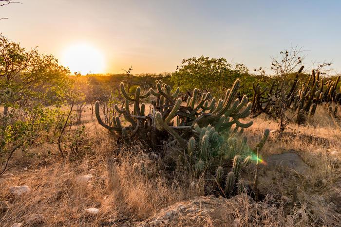 A vegetação de Caatinga é altamente adaptada ao clima semiárido, por meio de estruturas como caules grossos e com espinhos.