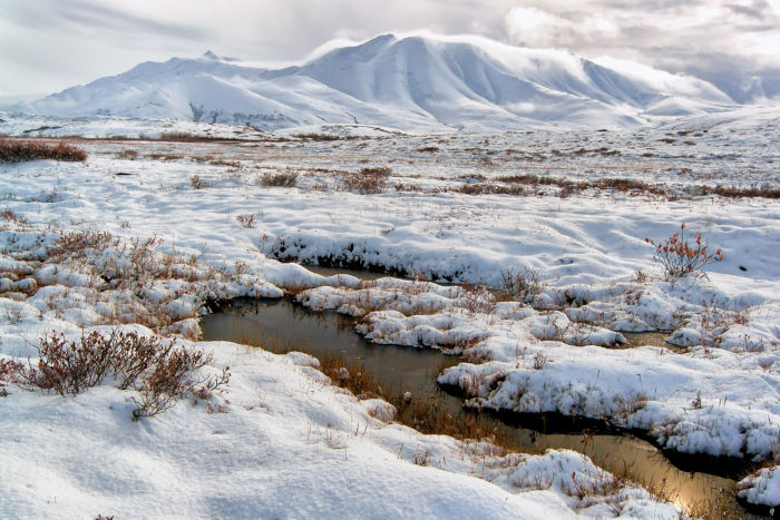 O solo da tundra permanece a maior parte do ano congelado. No verão, com o ligeiro aumento das temperaturas, ocorre o seu descongelamento.