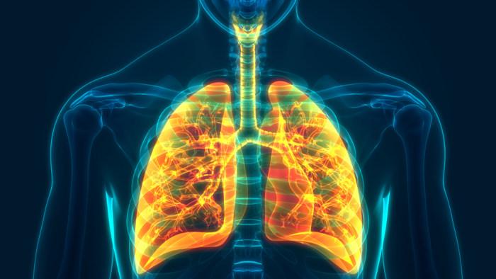 Os pulmões localizam-se no interior da caixa torácica.