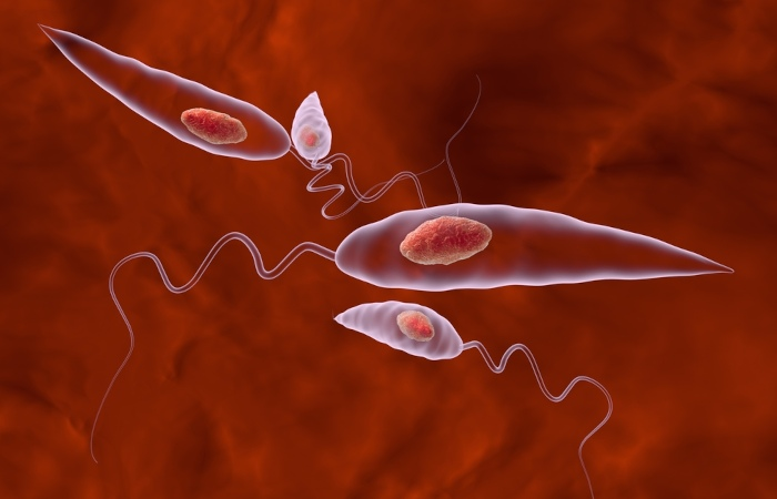 A leishmaniose visceral é provocada por um protozoário.