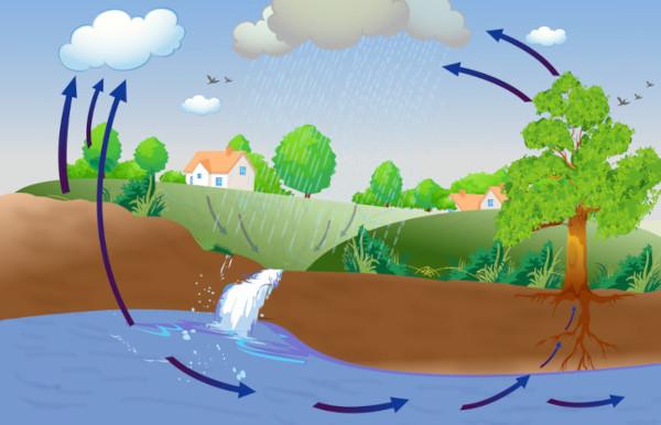 A evapotranspiração permite que a água presente nas plantas e no solo seja liberada na atmosfera.