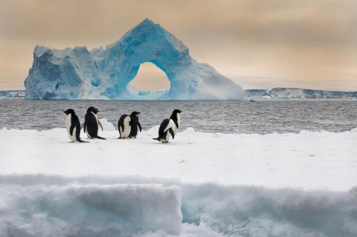 Os pinguins são animais típicos da Antártica. Eles apresentam grande resistência às condições adversas da região.