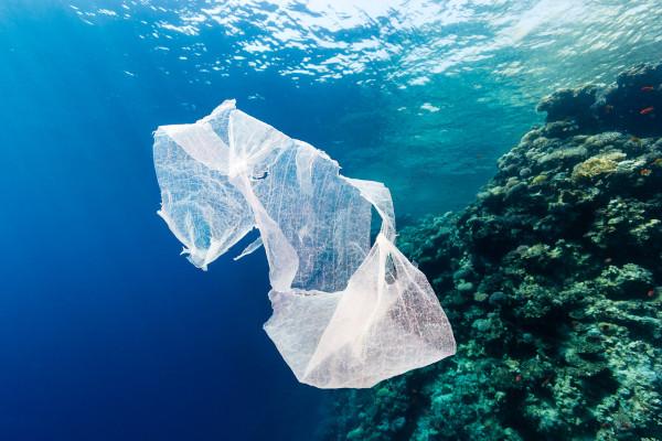 Os plásticos comuns têm um grande problema: são praticamente indestrutíveis.