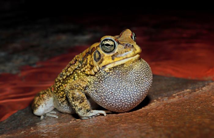 Sapos, rãs, pererecas e salamandras são exemplos de anfíbios.