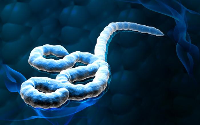 Ilustração do vírus ebola