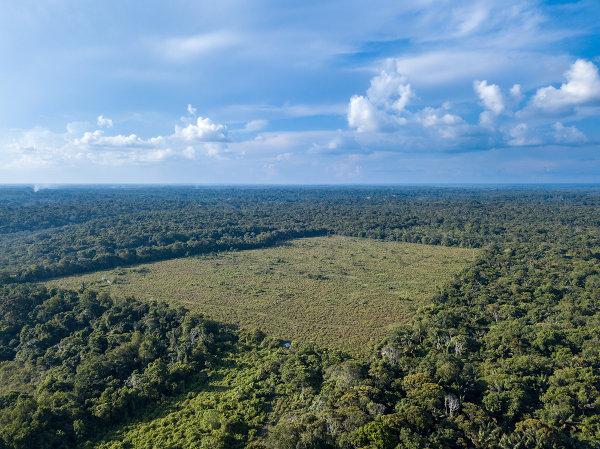 O Brasil é um dos países que mais desmatam as suas florestas.