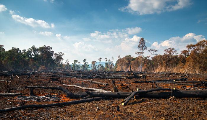 Foto de uma área após ter sido queimada.