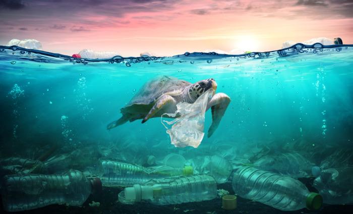 Quando poluímos o ambiente, estamos afetando negativamente diferentes seres vivos.