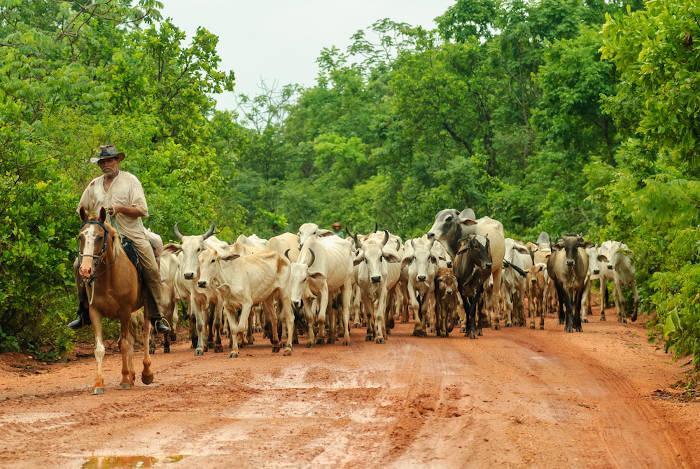 Homem a cavalo guia criação de gado por estrada.