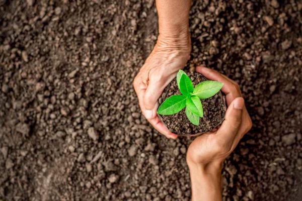 Ação antrópica positiva e redução de impactos negativos causados ao meio ambiente.