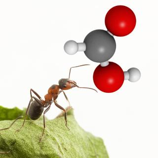 A dor intensa da picada das formigas vermelhas vem da ação do ácido fórmico ou ácido metanoico