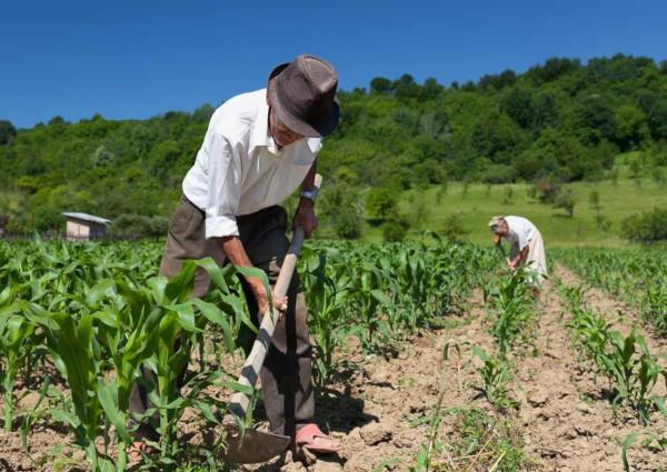 A agricultura familiar é voltada para a subsistência de núcleos familiares rurais e conta com técnicas rudimentares.