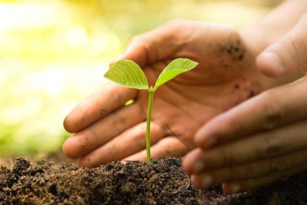 A agricultura sustentável promove o cultivo de produtos visando ao menor impacto ambiental possível.