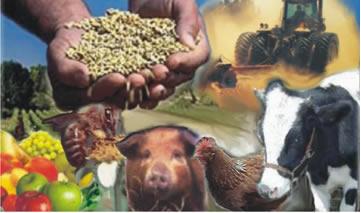 Conjunto de atividades que integram a agropecuária