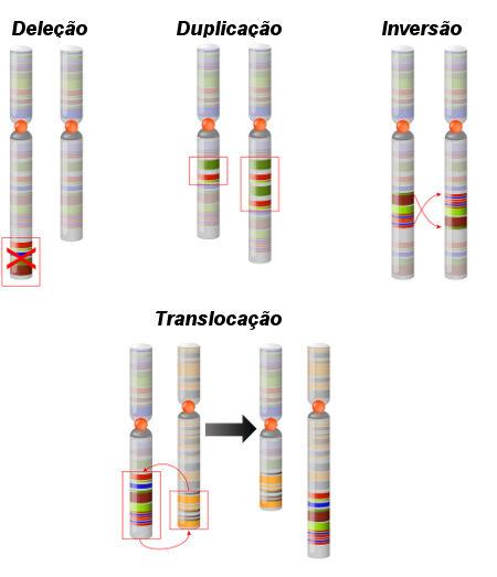 As alterações cromossômicas estruturais podem ser deleções, duplicações, inversões ou translocações