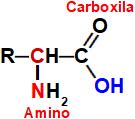 Fórmula estrutural de um aminoácido
