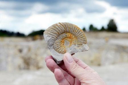Os paleontólogos podem dedicar-se, por exemplo, ao estudo dos invertebrados que viveram no passado