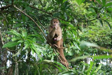 A extinção de muitas espécies está relacionada com o desmatamento
