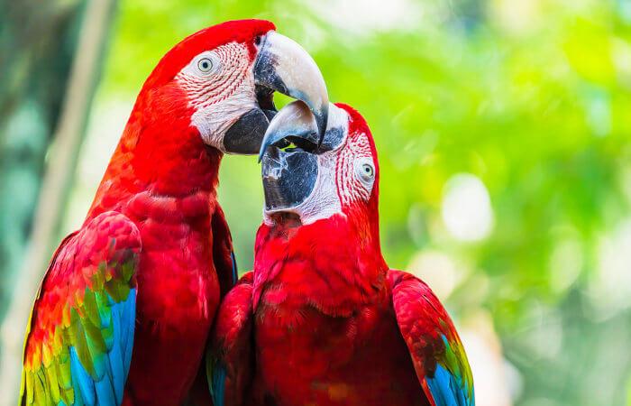 A presença de penas é uma das principais características de uma ave.
