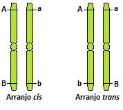 Observe a diferença entre o arranjo cis e trans