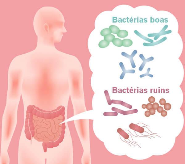 Algumas bactérias podem causar doenças ao organismo, entretanto, algumas são benéficas.