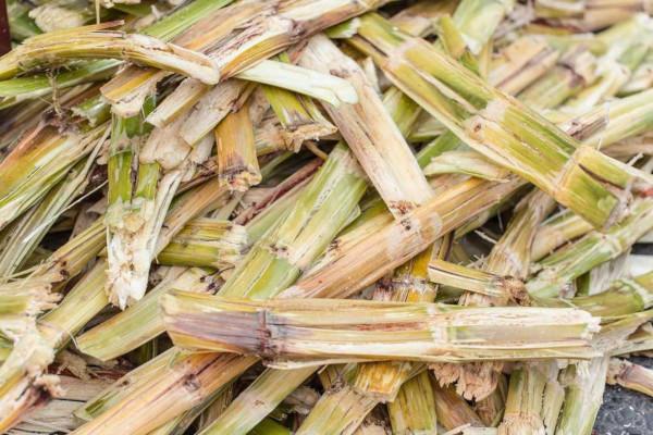 O bagaço da cana-de-açúcar é uma das fontes utilizadas para produção de biocombustíveis.