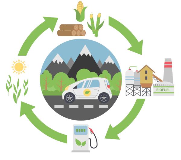 A produção de biocombustíveis acontece por meio do aproveitamento da biomassa, obtida pela queima de vegetais, como a madeira.