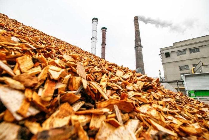 Biocombustíveis são produzidos por meio da queima de produtos da biomassa, como plantas e madeiras.*