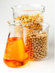 Os biocombustíveis têm como matérias-primas os óleos vegetais