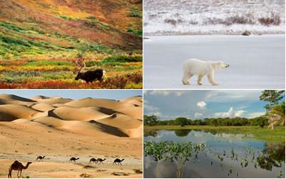 O planeta Terra apresenta uma grande variedade de biomas