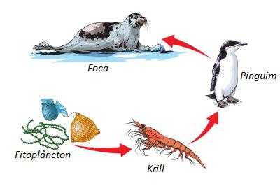 Observe a cadeia alimentar acima e identifique os diferentes níveis tróficos