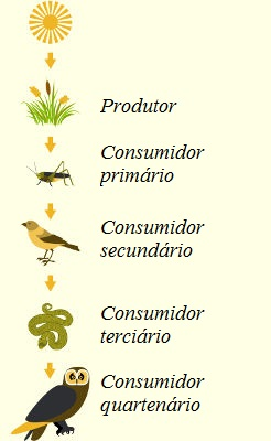 Na cadeia alimentar, observa-se um fluxo unidirecional de energia e nutrientes