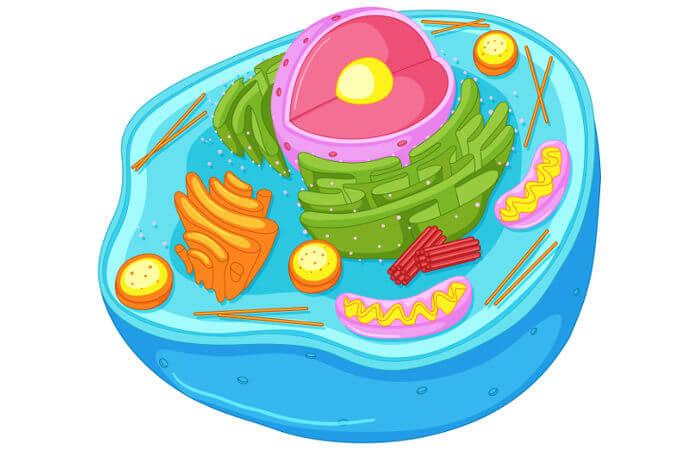 A célula animal apresenta algumas peculiaridades, como a presença de lisossomos.