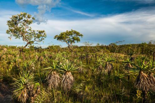Chapada dos Veadeiros – Goiás. O Cerrado brasileiro também é um tipo de Savana