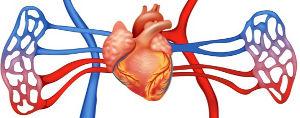 Observe um esquema representando o caminho percorrido pelo sangue do coração até o pulmão