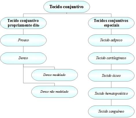 Observe que os tecidos conjuntivos podem ser classificados em dois grupos principais